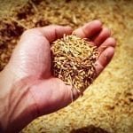 Cara Diet Nasi Merah Tepat Sesuai Anjuran Dokter dan Pakar Gizi